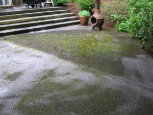 moss covered patio